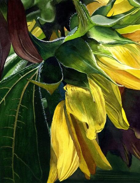 Sunflower Sigh