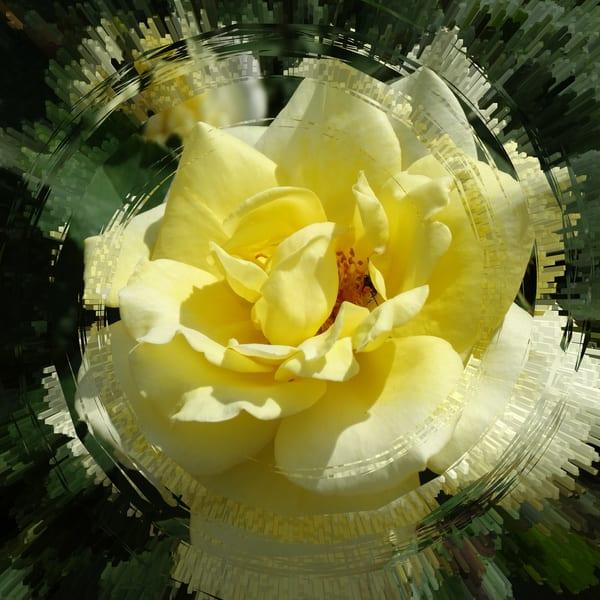 JRosenburg-Yellow-Rose-Abstract