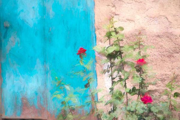 Armenian Village Roses Photography Art   Laura Tidwell Photography