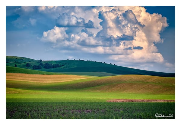 Spring Afternoon in the Palouse - Signature Series #5 | Shop Photography by Rick Berk