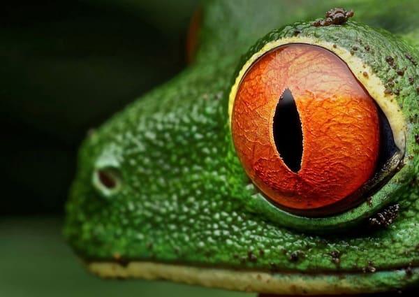 Frog Sun Art | Danny Johananoff