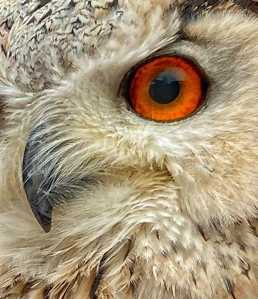 Owel Eye Art | Danny Johananoff