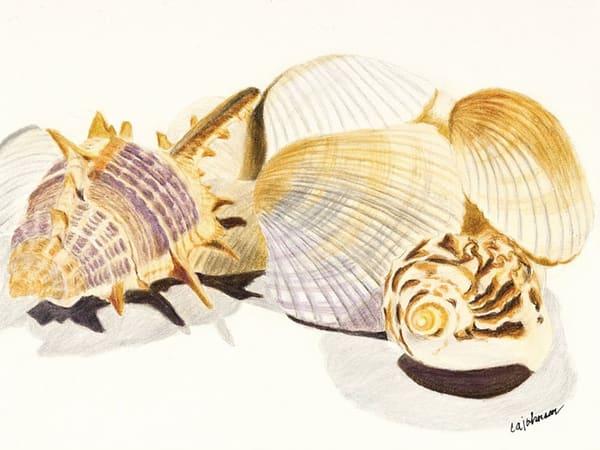 Shells - Framed Prints