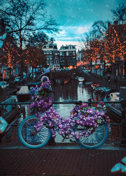 Butter Fly Bike Photography Art   Matej Silecky