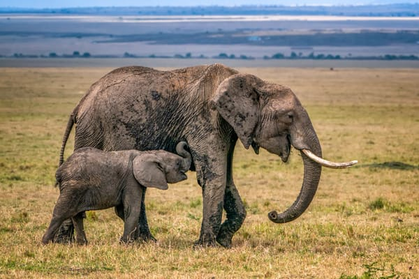 An Elephant And Her Calf Photography Art | Carol Brooks Parker Fine Art Photography