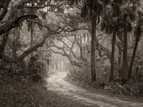 Low Country Road Photography Art | DE LA Gallery