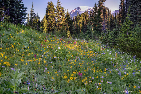 Mt Rainier National Park | Paradise Wildflower Meadows | PNW fine art photography prints