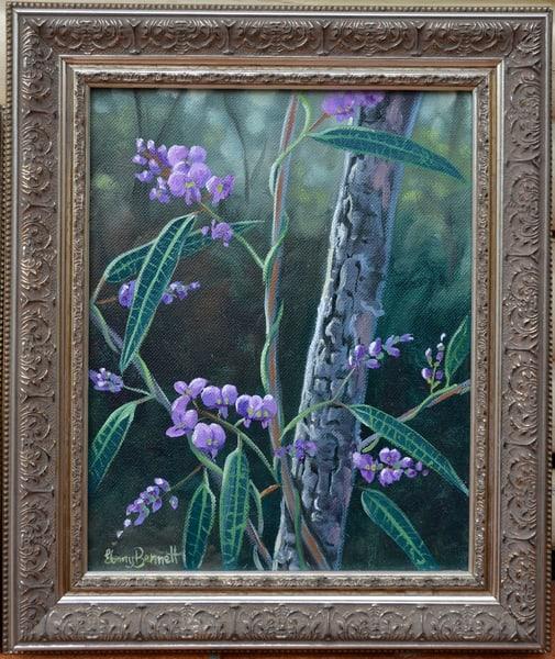 Hardenbergia violacea - Purple Pea
