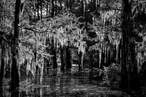 Into the Garden of Light and Darkness - Louisiana swamp photography prints
