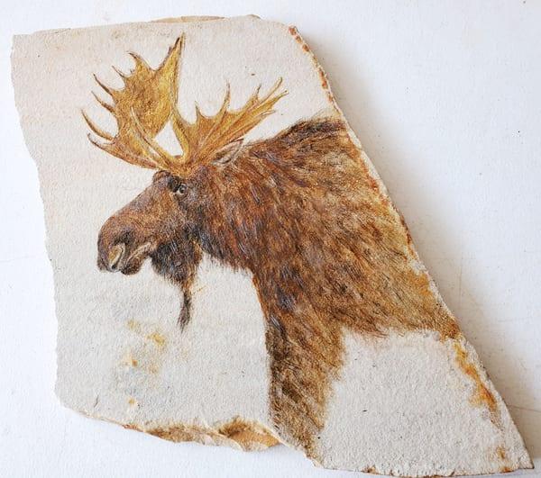 MSchmitt-Alaskan-Moose