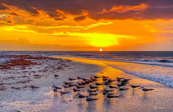 Terns Lovers Key Sunset Photography Art | vitopalmisano