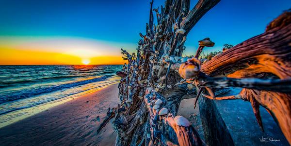 Shell Tree Photography Art | vitopalmisano