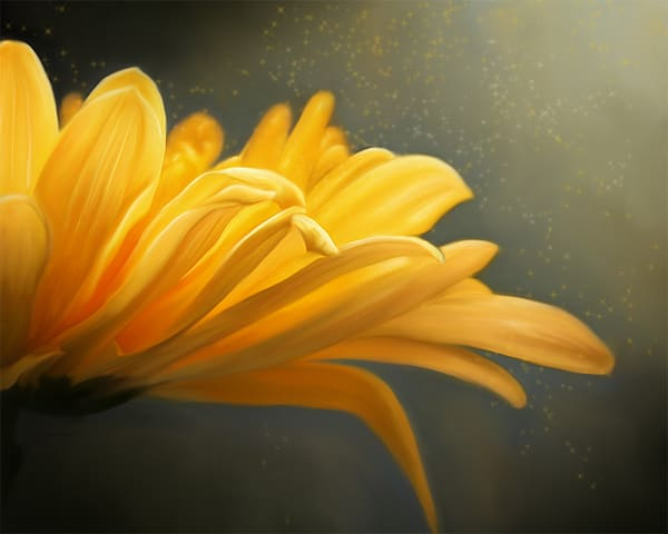 :  Fine Art Floral and Nature photography: Shop prints by An Artist's View Photography