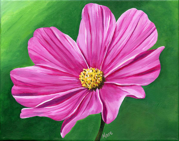 """""""Harmony"""" – 11""""x14"""" original acrylic painting of the Cosmos flower by Mary Anne Hjelmfelt."""
