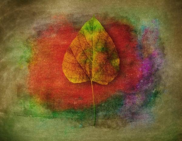 Leaf Study 01 Photography Art | Mark Steele Photography Inc