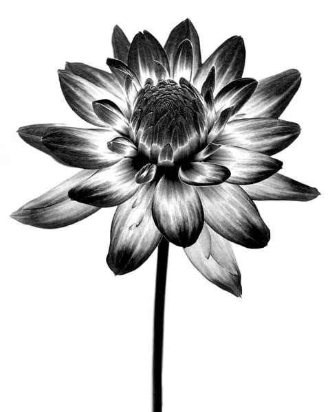 Botanical 3 Photography Art | MPF Gallery