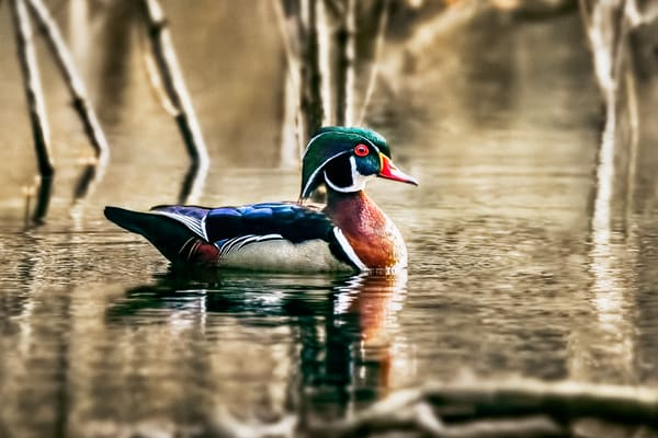 Dashing Drake Photography Art | Trevor Pottelberg Photography