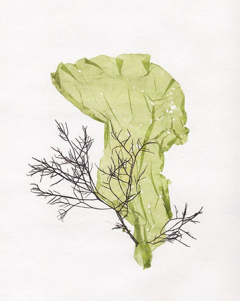 Pressed Seaweed 1 Art | East End Arts
