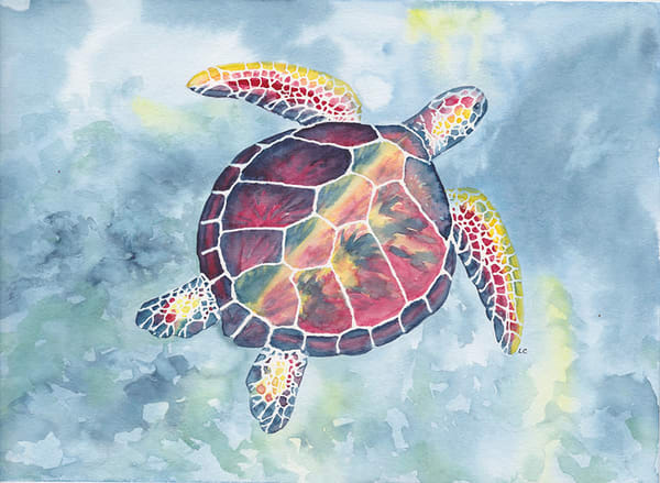 Sea Turtle Art | East End Arts
