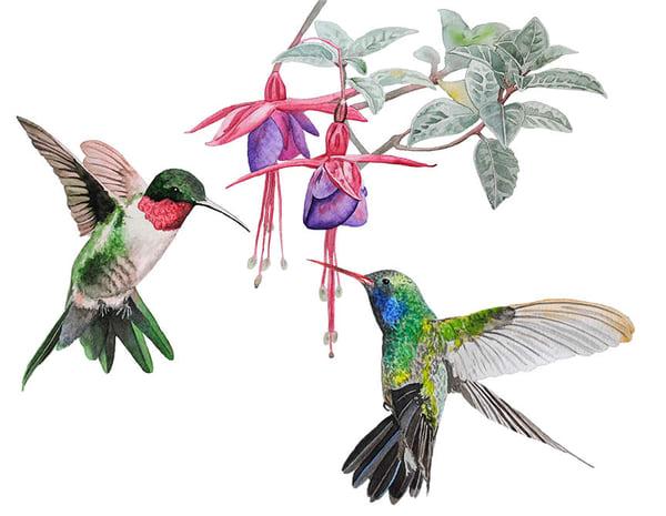 Hummingbirds Sword Fight Art | East End Arts