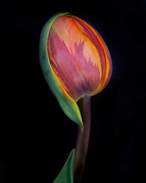 Botanical 7 Photography Art | MPF Gallery