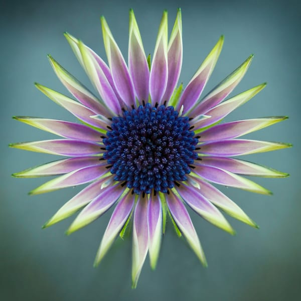 Botanical 22 Photography Art | MPF Gallery