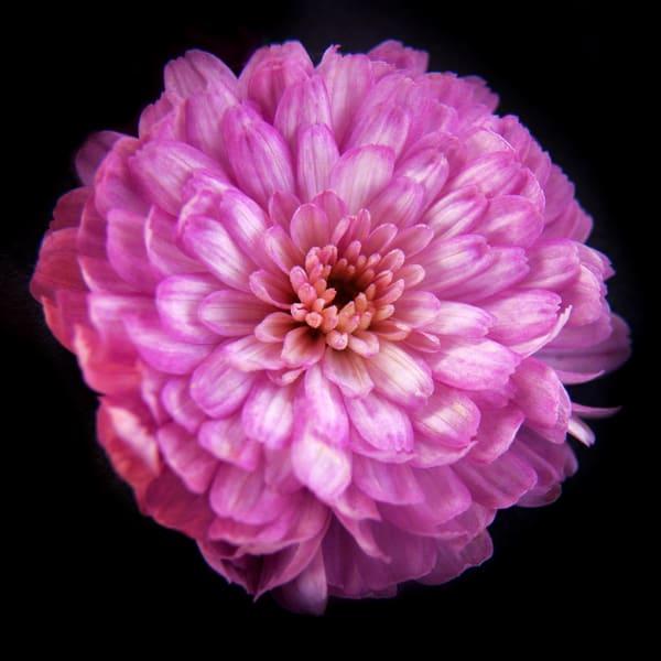 Botanical 24 Photography Art | MPF Gallery