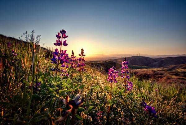 Wildflower Sunset Art | Chad Wanstreet Inc