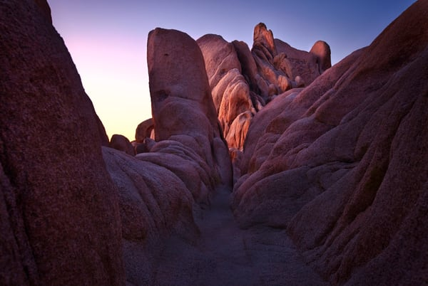 First Light On Joshua Tree Art | Chad Wanstreet Inc