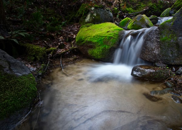 Springs Renewal Art | Chad Wanstreet Inc