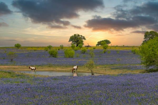 art, fine art, photo, photography, horse, paint, sunset, bluebonnet, field