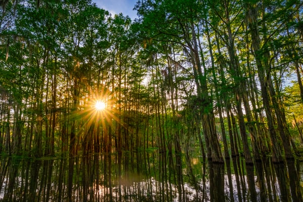 Shining through the swamp - Louisiana fine-art photography prints