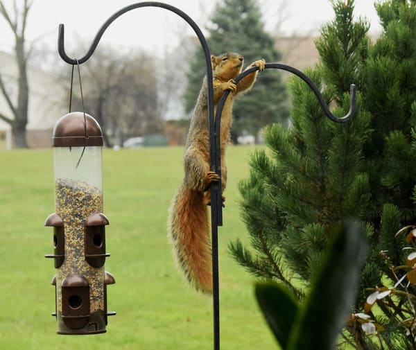 Squirrel Birdfeeder Art | DocSaundersPhotography