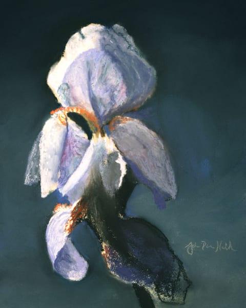 The Iris.