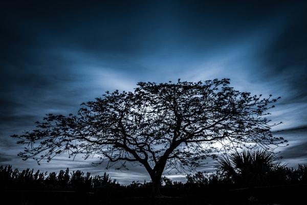 Tree Of Light Photography Art   Gingerich PhotoArt
