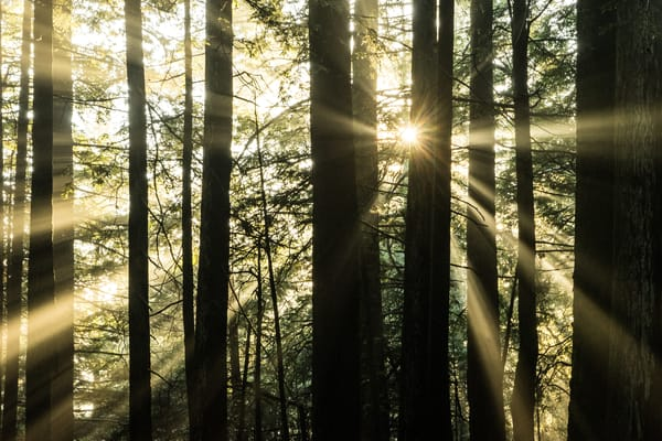 Angel Light - California forest landscape photograph print
