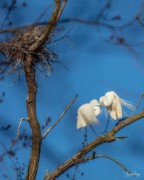 Time Of The Season Photography Art | brucedanz