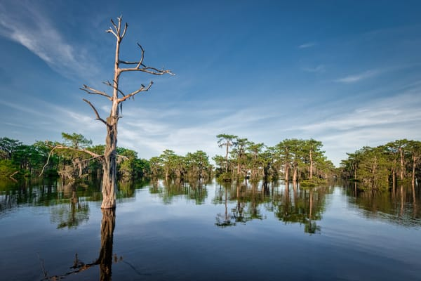 Death in Paradise - Louisiana swamp fine-art photography prints