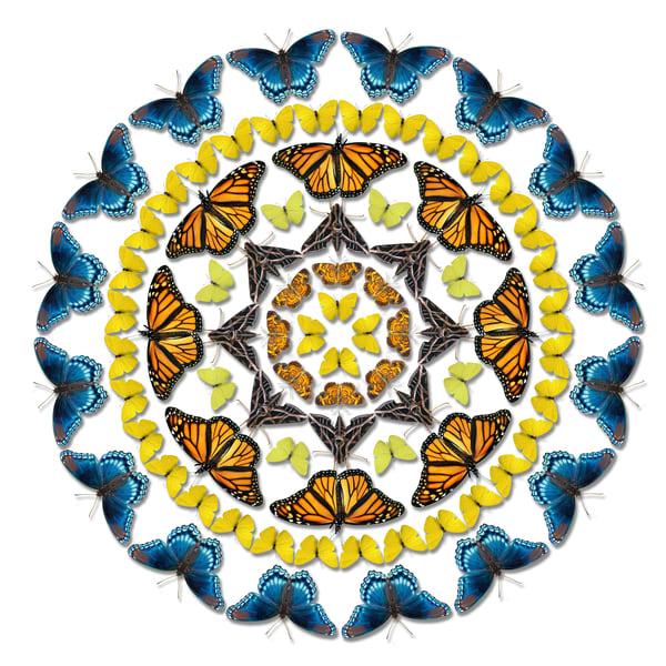 Lepidopterology Mandala Art   geometricphotographica