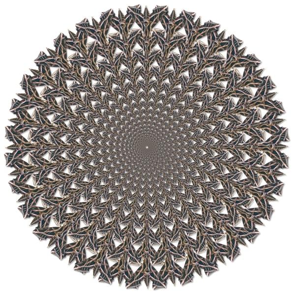 Sphinx Moth Web Art   geometricphotographica