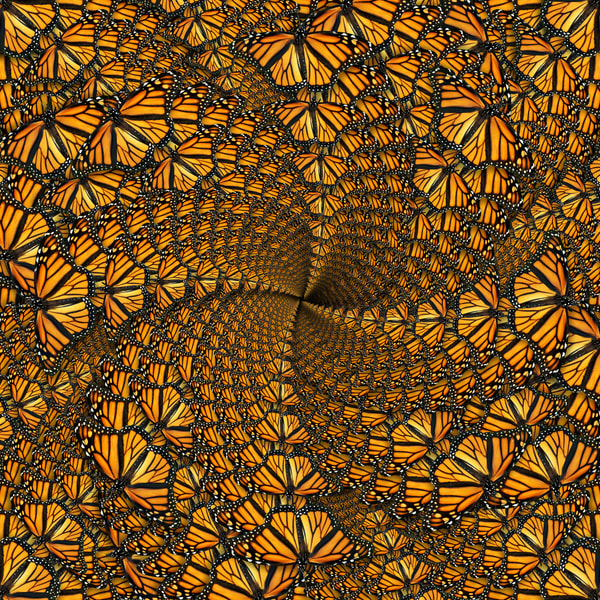 Monarch Forest Art   geometricphotographica