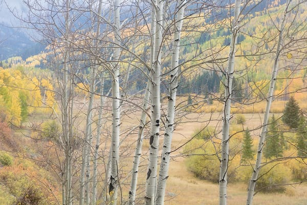 This Colorado meadow in Autumn is picture perfect. Available in four sizes as a Limited Edition fine art print.