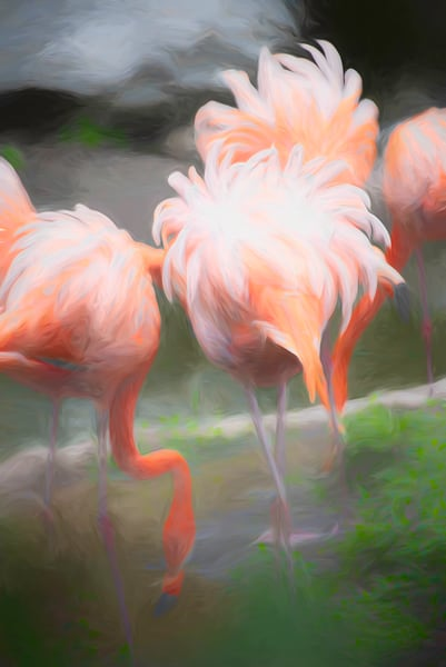 Fluffy Feathered Friends Photography Art | Pam Phillips Photography