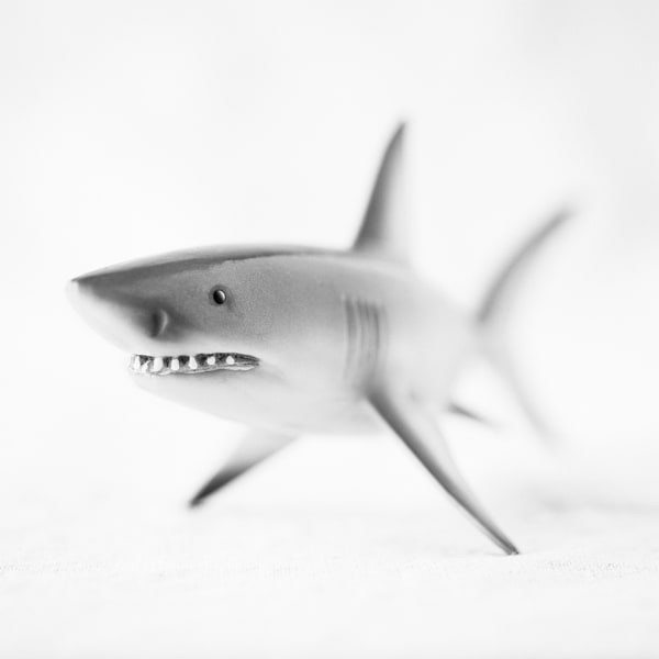 Great White Shark Photography Art | Roman Coia Photographer