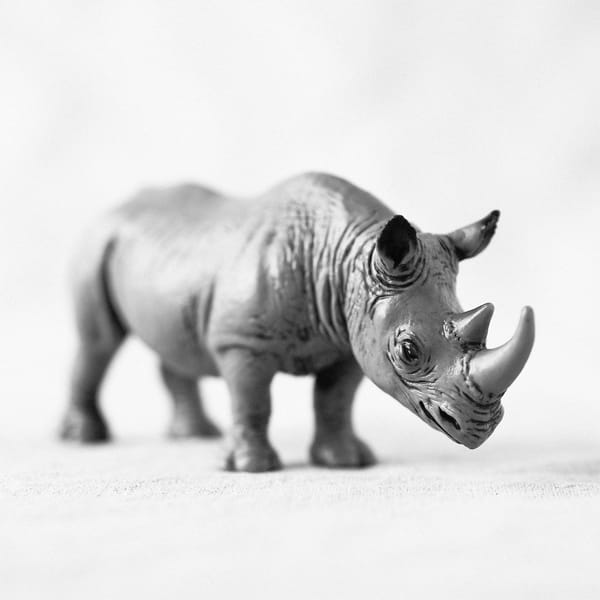 African Black Rhinoceros Photography Art | Roman Coia Photographer