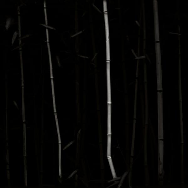 Bamboo Ii Photography Art | Roman Coia Photographer