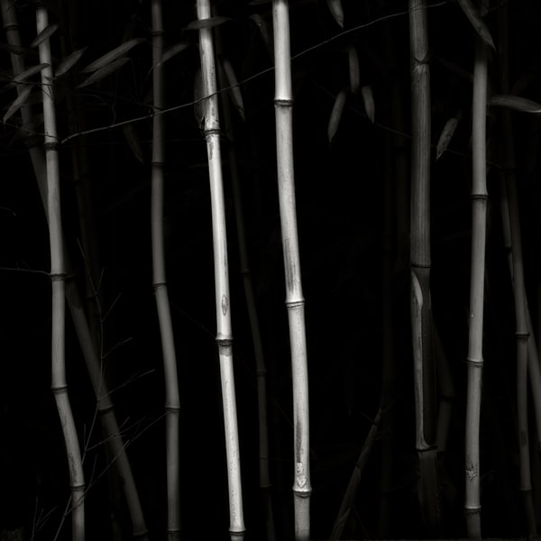 Bamboo Photography Art | Roman Coia Photographer