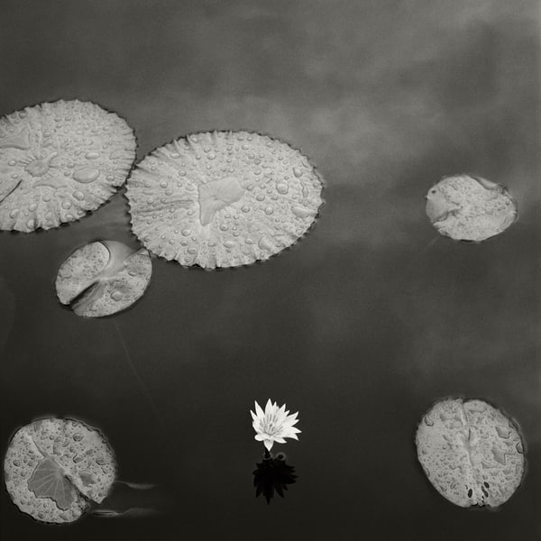 Lily Pad I Photography Art | Roman Coia Photographer