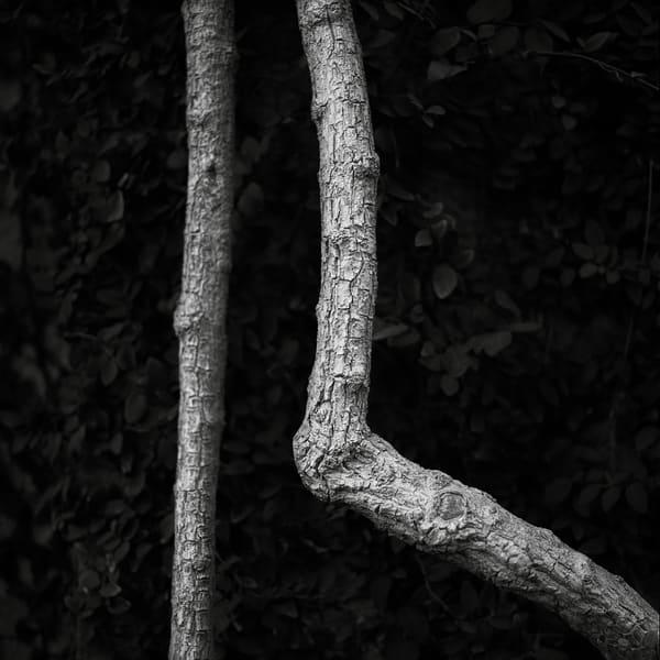 Bougainvillea Stalk Photography Art | Roman Coia Photographer