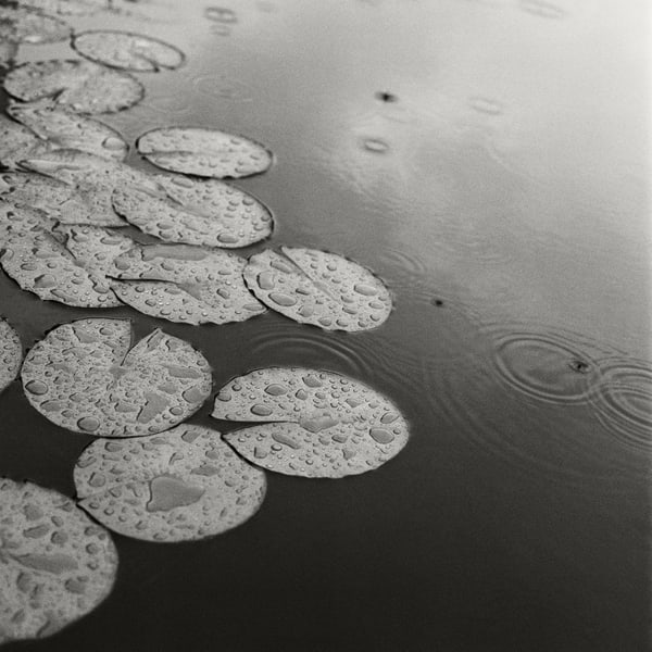 Lily Pad Ii Photography Art | Roman Coia Photographer